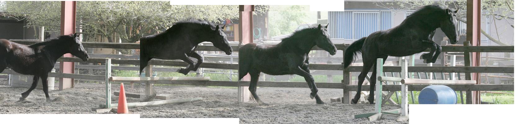 JC Dill's Percharab Horse,